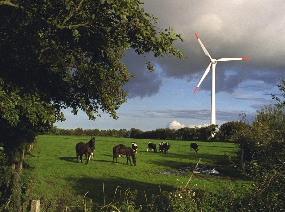 Pferde vor Windenergieanlage © BWE / Thorsten Paulsen