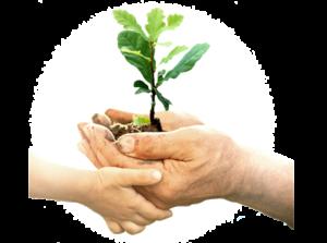 Nachhaltigkeit und Umweltschutz durch CO2-neutrales Hosting