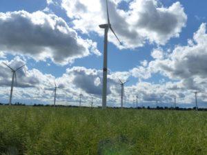 Windenergieanlagen in einem Rapsfeld in der Uckermark, Foto: Andreas Kühl