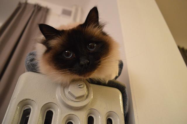 Katze auf Heizung