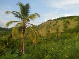 Qinous realisiert Inselbetrieb mit PV-Anlage und Batteriesystem