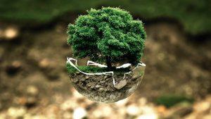 Wie funktioniert die Kompensation von CO2-Emissionen?