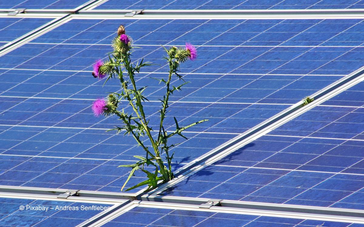 Agriphotovoltaik: Landwirtschaft und Photovoltaik auf einer Fläche